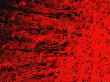 Cerebral Cortex Golgi X20 Method Glia Dendrites - Fotografik Baskı