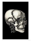 Human Skull Exploded View Giclee Print