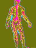 Full Body Nervous System Medical Photographic Print