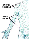 Lymphatic System Circulation of Lymph Fluid Photographic Print