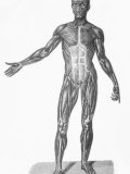Historical Skeleton Muscular System Photographic Print