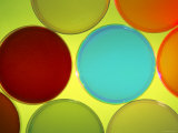 Multicolored Culture Media in Petri Dishes Photographic Print