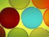Multicolored Culture Media in Petri Dishes Photographic Print