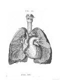 Bronchia and Blood Vessels of the Lungs Giclee Print