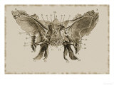 Cerebral Surface Sphenoid Bone Giclee Print