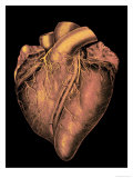 Heart Historic Cardiac Colorized Giclee Print