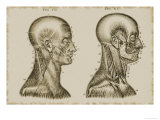 Muscles of the Head and Neck Giclee Print
