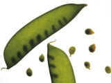 Close Up Snow Pea Pods Photographic Print