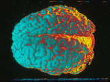 Color Brain Blue, Yellow, Red Photographic Print