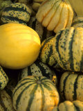 Varied Color Size Squash Farmers Market Chicago Photographic Print