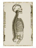 Skull Spinal Column Sinuses Giclee Print