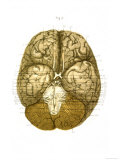 under Surface of Brain Cranial Nerves Giclee Print