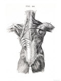 Muscles of the Back Giclee Print