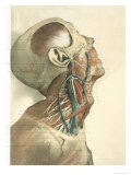 Dissection of Rt. Head Face Neck Thorax Arm Giclee Print