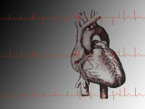 Heart and Readout of EKG ECG Cardio Rhythms Fotografie-Druck