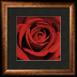 Romatic Blooming Red Rose Prints by Laurent Pinsard