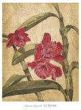 Hawaiian Tropics III Prints by Elizabeth Jardine