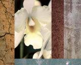 Tropical Whites I Prints by M.J. Lew