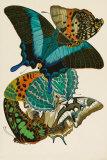 Collection III Art