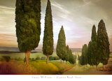 Cypress Road, Siena Prints by Jimmy Williams