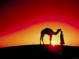 Silhouette of Camel and Driver Walking During Peaceful Sunset in India Photographic Print