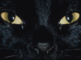 Close Up of Eyes and Nose of Black Cat Photographic Print