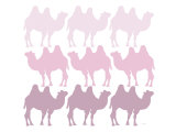 Pink Camel Family Affiche par  Avalisa