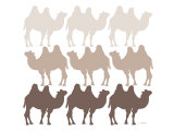 Brown Camel Family Poster by  Avalisa