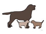 Chocolate Lab Poster by  Avalisa