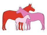Pink Herd Posters par  Avalisa