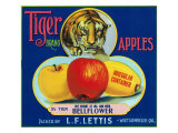 Tiger Brand Apple Label, Watsonville, California Posters by  Lantern Press