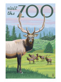 Visit the Zoo, Elk and Herd Posters by  Lantern Press