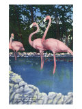 St. Petersburg, Florida, View of Pink Flamingos at Florida Wild Animal Ranch Prints by  Lantern Press