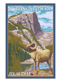 Mount Evans, Colorado, Big Horn Sheep Posters by  Lantern Press
