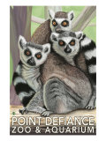 Tailed Lemurs, Point Defiance Zoo and Aquarium Print by  Lantern Press