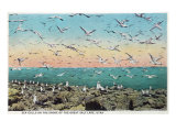 Utah, View of Sea Gulls Landing on the Great Salt Lake Shore Prints by  Lantern Press