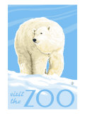 Visit the Zoo, Polar Bear Solo Arte por  Lantern Press