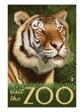 Visit the Zoo, Sumatran Tiger Scene Premium Giclee-trykk av  Lantern Press