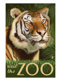 Visit the Zoo, Sumatran Tiger Scene Posters by  Lantern Press