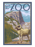 Visit the Zoo, Big Horned Sheep Scene Posters by  Lantern Press