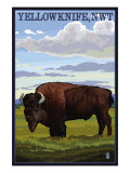 Yellowknife, NW Territories, Canada, Bison Scene Prints by  Lantern Press