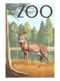 Visit the Zoo, White Tailed Deer Scene Poster by  Lantern Press