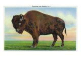 Buffalo, New York, Greetings From with a Buffalo Prints by  Lantern Press