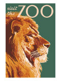 Visit the Zoo, Lion Up Close Poster von  Lantern Press