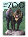 Visit the Zoo, Mandrill Scene Art