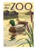 Visit the Zoo, Mallard Ducks Scene Prints by  Lantern Press