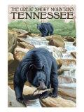 Great Smoky Mts. National Park, TN, Black Bear Fishing Posters