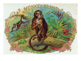 Monkey Brand Cigar Box Label Art by  Lantern Press