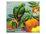 Pomona, California, The Parrot Brand Citrus Label Posters av  Lantern Press