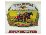 Royal Harvest Brand Cigar Box Label Poster by  Lantern Press